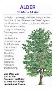 sacred celtic trees alder jo s stuff celtic tree