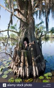Tree Trunk Hunting Blind North America Usa Texas Marion Co Caddo Lake Photographer In