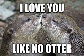 Funny Love You Meme - i love you like no otter i love you like no otter quickmeme