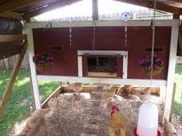 dirt floor in chicken run backyard chickens