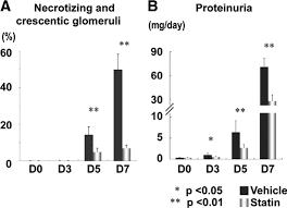 statin attenuates experimental anti glomerular basement membrane