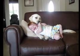 Why Do Dogs Lick The Sofa This Baby And Lab Are Couch Potato Friends Uplift