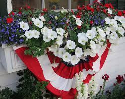 Plants For Winter Window Boxes - best 25 window box flowers ideas on pinterest window boxes