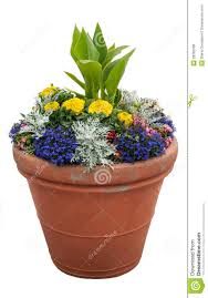 potted plants royalty free stock photos image 28302008