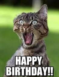 Happy Birthday Cat Memes - funny cat happy birthday memes trolls cat birthday memes