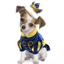 Funny Dog Costumes Halloween 26 Halloween Dog Costumes Images Animals Dog