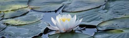 Flower Shops In Snellville Ga - the yoga source u2013 gwinnett magazine u0027s u0027best place for yoga u0027