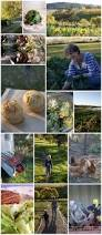 Organic Vegetable Gardening Annette Mcfarlane by The 84 Best Images About Organic Gardening On Pinterest