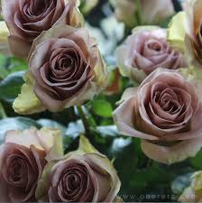 wedding flowers ni amnesia dusky pink roses contact nicci snook flowers specialist