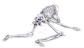 human skeleton lying down u2013 defenderauto info