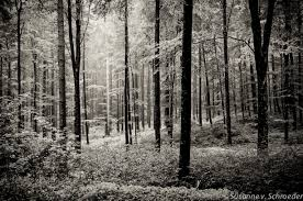 Forest Home Decor by Black U0026 White Photography Forest Scenery Rainy Summer