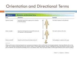 Directional Terms Human Anatomy Writing Introductions For Anatomy Directional Terms Game