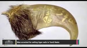 man arrested for selling tiger nails in tamil nadu youtube