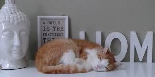 divanetti per gatti mobili per gatti come arredare la casa a misura di gatto cose