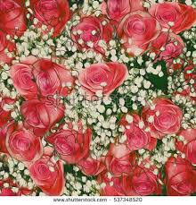 roses colors abstract background flowers closeup stock photo 112513124
