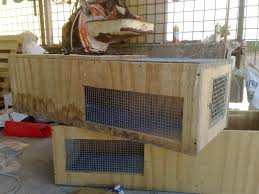 gabbia per pulcini nuove gabbie riscaldate per svezzare i pulcini cocincina poultry