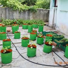 terrace gardening organic seeds pioneer agro industries terrace gardening