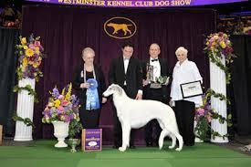 westminster bluetick coonhound 2016 borzoi shih tzu bulldog german shepherd win respective groups
