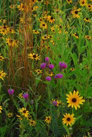 native plants of illinois south patrol road restoration area