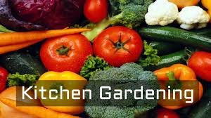 How To Grow Vegetables by What Is Kitchen Gardening Why Kitchen Gardening How To Grow