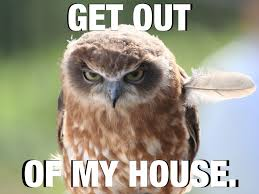 Owl Memes - owl memes google search yeahbsolutely pinterest owl memes