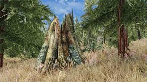 skyrim special edition etd every tree different preview
