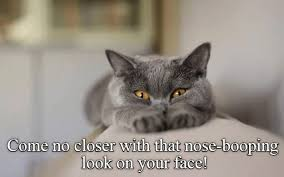 Lol Cat Meme - oh nose you don t lolcats lol cat memes funny cats