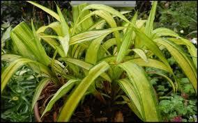 plant finder hinsdalenurseries com