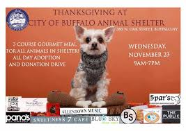 chef creates gourmet thanksgiving dinners for shelter dogs cats