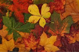 Autumn Color Schemes Fall Color Schemes We Love Design Matters By Lumens
