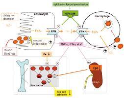 pathogenesis and treatment of anemia in inflammatory bowel disease