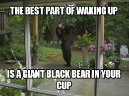 Funny Bear Meme - the weekly meme contest inquisitive bear mandatory