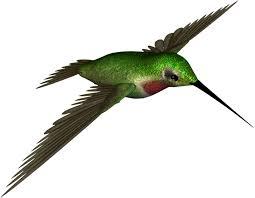 free hummingbird clipart free download clip art free clip art