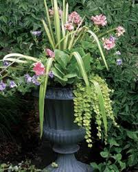 Low Maintenance Plants And Flowers - 10 plants for year round containers fine gardening