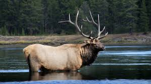traveling naturalist 5 top spots to see yellowstone u0027s wildlife