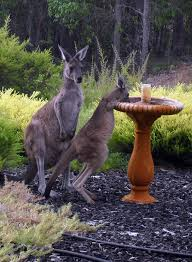 native plant nurseries perth a selection of garden plants unattractive to kangaroos infobarrel