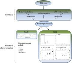 challenges in evaluation of chitosan and trimethylated chitosan