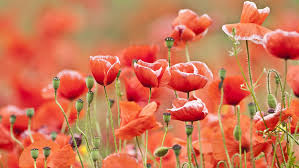 resources to remembrance day tes