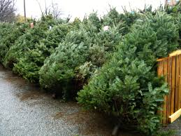 christmas tree sales benefit north ridgeville schools cleveland com