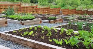 Urban Veggie Garden - 6 inspiring urban gardening projects books for better living