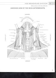 anatomy coloring book chapter 12 anatomy and physiology coloring