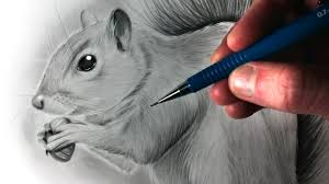 how to draw a squirrel youtube