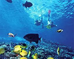 Hawaii snorkeling images Snorkeling in hawaii laikatours jpg
