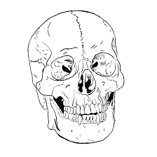 pictures anatomy human head coloring page human anatomy diagram