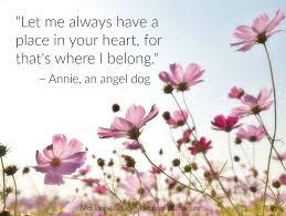 loss of dog 410 best pet loss images on the rainbow bridge angel