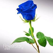 blue roses for sale big sale blue fragrant gardens flowering plants