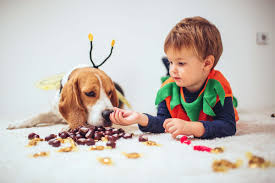 Puppy Makeup Halloween by Halloween Dog Safety Tips Reader U0027s Digest