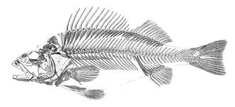 Printable Halloween Skeleton Instant Art Printable Download Fish Skeleton The Graphics Fairy