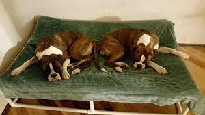 big w dog beds u2013 startupselfie co
