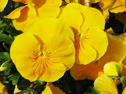 Yellow Orange Flowers - pictures of flowers of different colors
